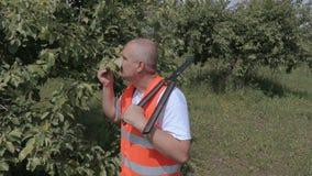 O pomar com jardineiro scissors a verificação da árvore de maçã filme