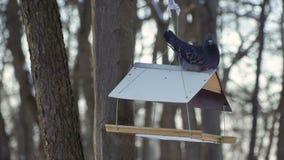 O pombo cinzento senta-se no telhado de alimentadores do pássaro filme