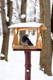 O pombo em uma calha de alimentação no inverno fotografia de stock