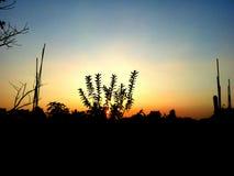 O por do sol foto de stock