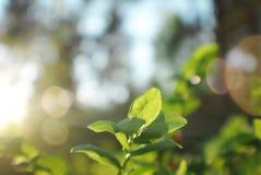 O por do sol bate a planta fotografia de stock