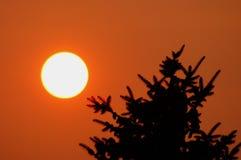 O por do sol bonito Fotografia de Stock