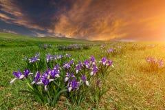 O por do sol bonito sobre a florescência torna iridescente nas montanhas Fotografia de Stock Royalty Free