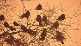 O por do sol canta natureza do rebanho dos pássaros que sentam-se no frio do inverno da árvore video estoque