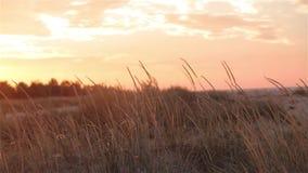O por do sol colorido no campo, o vento agita a grama no por do sol filme
