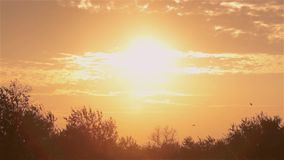 O por do sol colorido, pássaros voa contra o sol de ajuste, por do sol colorido na natureza vídeos de arquivo