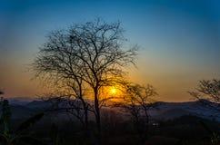O por do sol com as árvores mostradas em silhueta Fotografia de Stock