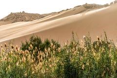 O por do sol, dunas de areia no litoral da pe?a de Nile River chamou a primeira catarata, Aswan Egito fotografia de stock royalty free