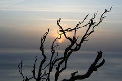 O por do sol enraíza três Imagens de Stock Royalty Free