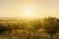 O por do sol impressionante sobre oliveiras coloca em Toscânia, Itália Imagens de Stock