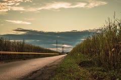 O por do sol isolou a estrada no meio do campo no brianza de monza fotos de stock