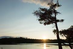 O por do sol mostra em silhueta a árvore alta, curvada imagens de stock