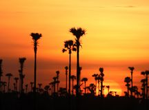 O por do sol na exploração agrícola do campo de Camboja no kampong spue província Fotografia de Stock