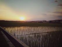 O por do sol na tarde no arroz coloca fotos de stock royalty free