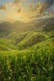 O por do sol no arroz arquivou o terraço no campo de Dazhai, província de Shanxi, China foto de stock