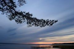 O por do sol no céu nebuloso azul na perspectiva do pinho ramifica Imagens de Stock