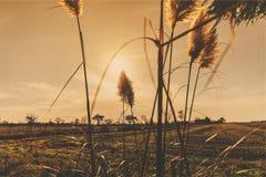 O por do sol planta o país rural dos campos Fotos de Stock Royalty Free