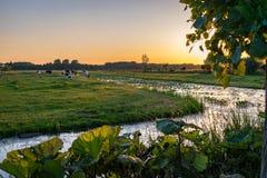 O por do sol sobre o campo cênico perto do Gouda, a Holanda com vacas e ele é muitos canais fotografia de stock