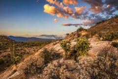 O por do sol sobre o cholla e os cactos perto de Javelina balança no parque nacional de Saguaro imagem de stock