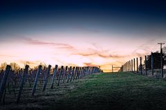 O por do sol do vinhedo é todo o silêncio no crepúsculo fotos de stock royalty free