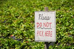 O ` por favor não escolhe aqui o sinal em uma exploração agrícola orgânica da morango da U-picareta, Califórnia do ` Imagem de Stock