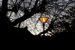 O poste de luz que incandesce no parque com inverno ramifica silhuetas fotos de stock
