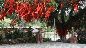 O povo chinês amarrou a bandeira santamente no ramo da árvore sagrado para rezar no jardim video estoque
