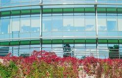 O prédio de escritórios e a parede cobriram o outono da videira virgem Foto de Stock Royalty Free