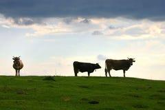 O prado Fotografia de Stock
