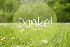 O prado de Gras, Daisy Flowers, meios de Danke do texto agradece-lhe Fotos de Stock