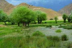 O prado de tibet fotografia de stock