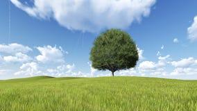 O prado do campo do verde da árvore e a fuga 3D rendem Fotos de Stock Royalty Free