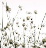 O prado do verão mostra em silhueta o fundo da arte foto de stock