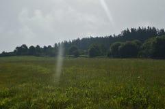 O prado verde mesmo com Forest Of Pines And um fundo de Forest Of Eucalyptus In The e raios de luz marchou no tiro Natur foto de stock