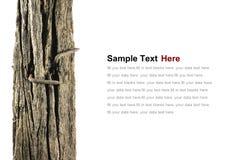 O prego oxidado velho na madeira velha Foto de Stock