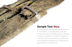 O prego oxidado velho na madeira velha Fotografia de Stock