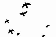 O preto perfila pássaros de voo Foto de Stock
