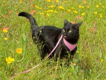 O preto pode na trela em um prado colorido da mola Imagens de Stock Royalty Free