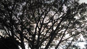o preto ramifica árvore na construção no céu da noite Fotografia de Stock Royalty Free