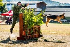 O primeiro campeonato da polícia nacional de Ucrânia com os alimentadores de cão totais Foto de Stock