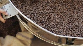 O processo derrama fora dos grãos de café fritados no saco na fábrica filme