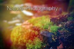 O projeto exprime a rotulação da tipografia da fotografia da natureza nas madeiras naturais imagens de stock