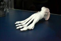 O protótipo branco do esqueleto do pé humano imprimiu na impressora 3d na superfície da obscuridade Fotos de Stock Royalty Free