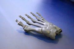 O protótipo cinzento do esqueleto do pé humano imprimiu na impressora 3d na superfície da obscuridade Fotos de Stock