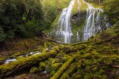 O proxy bonito cai na névoa, Oregon fotos de stock