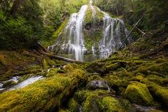 O proxy cai na floresta tropical de oregon foto de stock