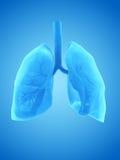 O pulmão humano Imagem de Stock Royalty Free