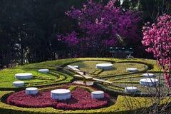 O pulso de disparo da flor no parque da montanha de Yangming imagens de stock royalty free