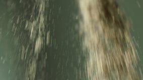 O punhado do ganho cai lentamente para baixo da mão adulta branca do ` s do homem no fundo verde no movimento lento vídeos de arquivo