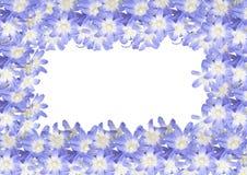 O quadro, cartão da mola floresce o helidoxa isolada no branco Imagem de Stock